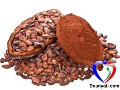 الكاكاو و فوائده